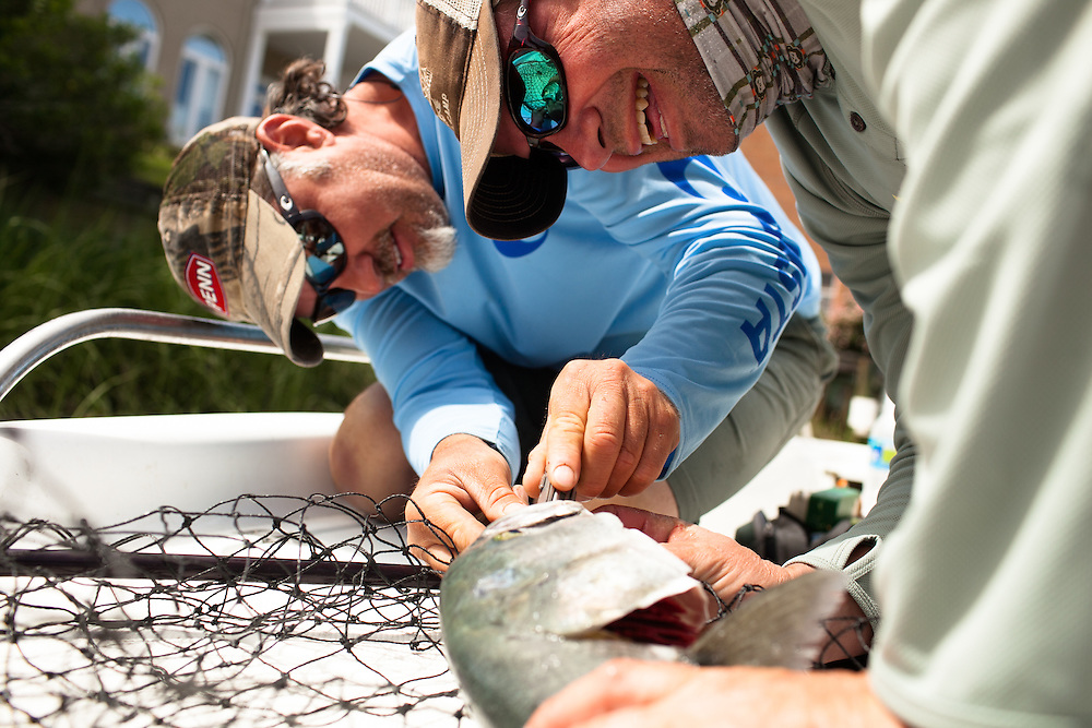Blue fish hook removal. Captain Neil Renous with Old Dominion Outdoors. Virginia Beach, VA.