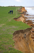 Rapidly eroding cliffs in Benacre National Nature Reserve Suffolk England - people walking along footpath