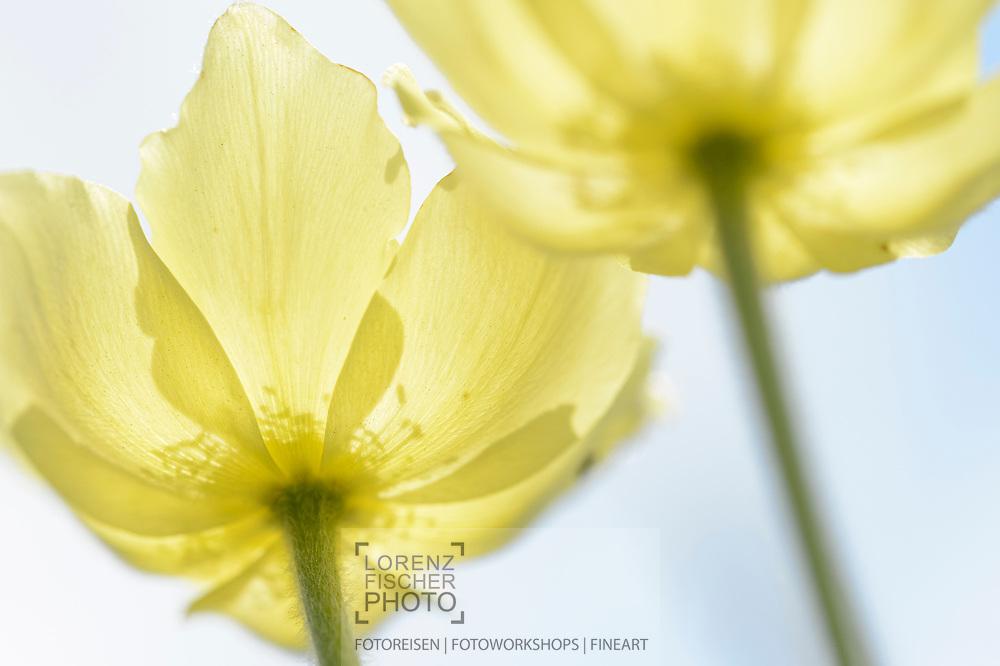 Wiesen Und Blumen Im Unterengadin Lorenz Andreas Fischer