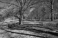 The Bridle Path west of the Great Lawn in Central Park