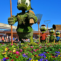 Donald Duck, Huey, Dewey and Louie Topiaries in Entry at Epcot in Orlando, Florida<br /> Donald Duck and his three nephews - Huey, Dewey and Louie – greeted you at the entrance for the first time in 2016 during the Epcot International Flower Garden Festival. They are one of 70 character topiaries within the 300 acre park during the annual spring event. The three boys were introduced in a comic strip in 1937. They were also the stars of the Quack Pack, a short-lived animated TV show originally aired in 1996. This scene is from a 1943 comic book called The Victory Garden.