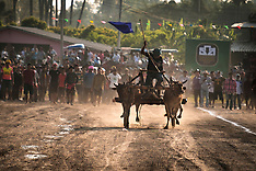 Ox Cart Races, Petchaburi, Thaialnd