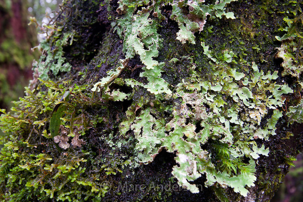 what is a tree trunk covered with 4 letters - moss and lichen on a tree marc anderson photography