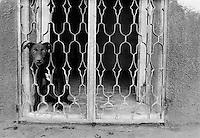 Dog in window, Chetumal, Mexico