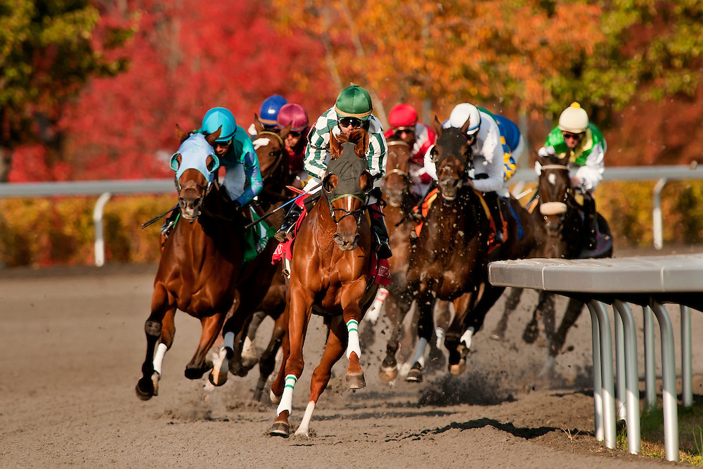 Keeneland  2011 Fall Meet