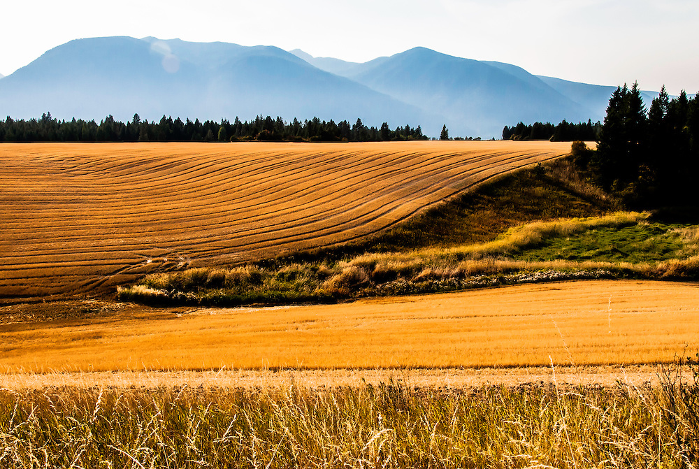 A harvested wheat field at sunset near Creston, BC, Canada.