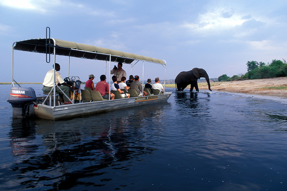Africa, Botswana, Chobe National Park, Safari boat approaches Elephants (Loxodonta africana) on Chobe River