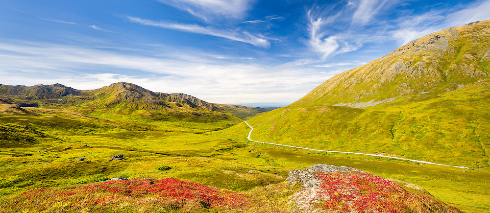 Composite panorama of Bearberry (Arctostaphylos uva-ursi) leaves at peak autumn colors in the alpine area of the Talkleetna Mountains at Summit Lake State Recreation Site in Hatcher Pass in Southcentral Alaska. Summer. Afternoon.