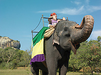 Young woman riding on elephant trees in background
