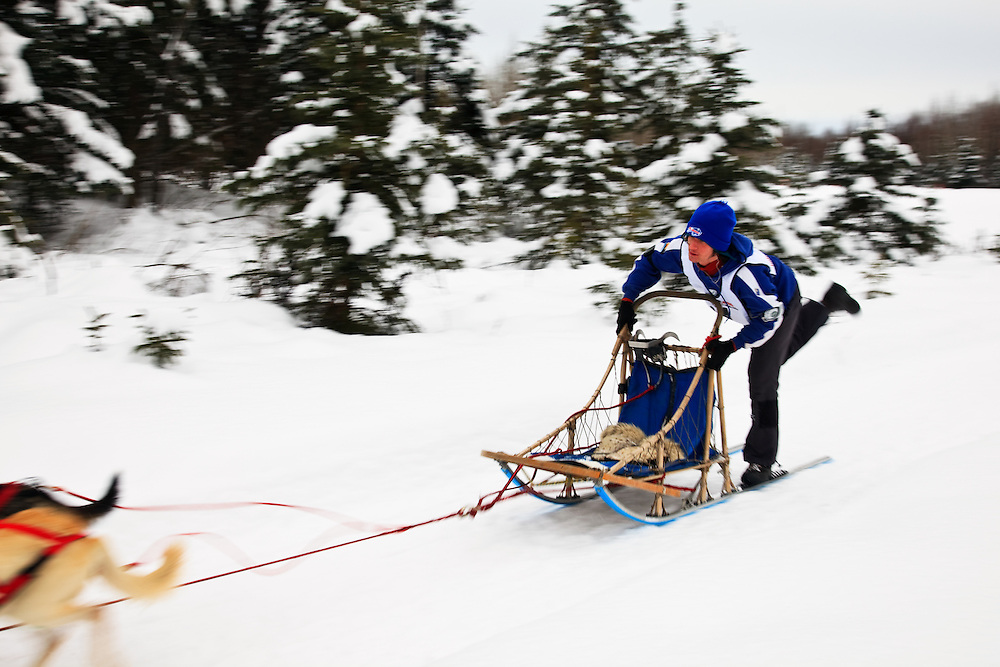 Musher Will Kornmuller and sled dogs in the Fur Rendezvous World Sled Dog Championships on the Campbell Creek Trail in Anchorage, Alaska. Southcentral. Afternoon.