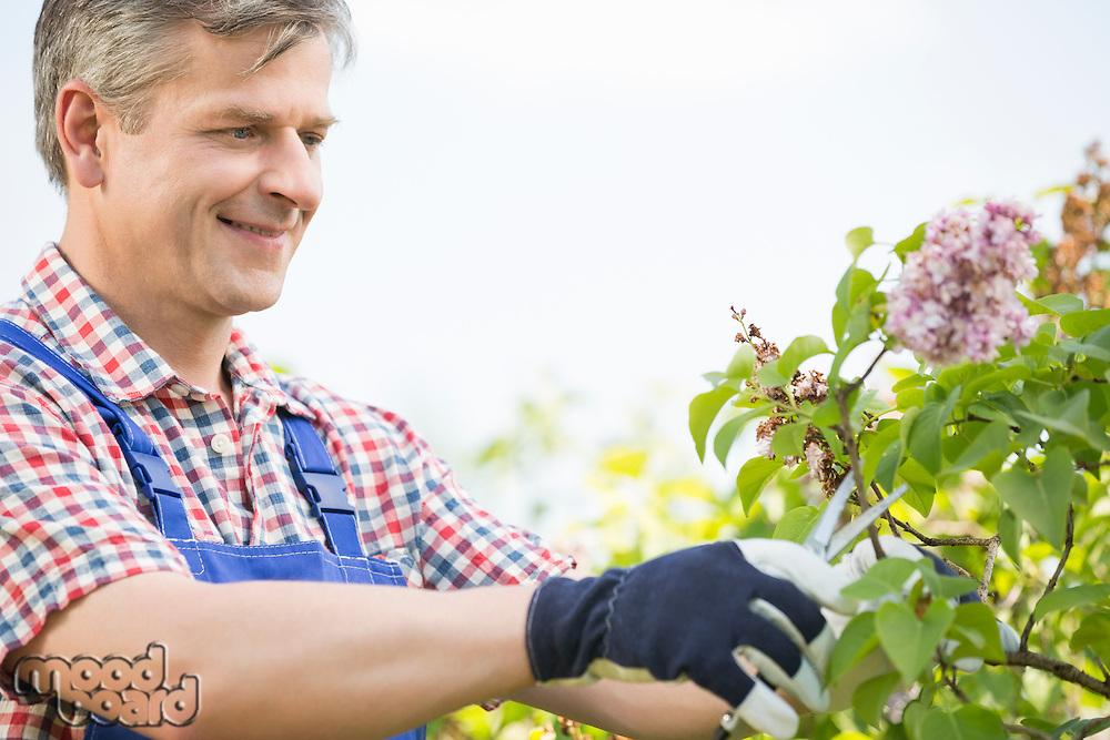 Man cutting branches at garden