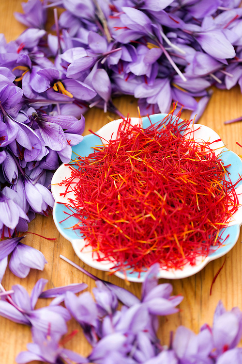 Plate of saffron threads surrounded by saffron (crocus sativus) flowers and petals, photographed on a wooden table texture at a saffron farm, Taliouine, Morocco 2015-10-27.<br /><br />If stigmas are left on the flowers after being picked, they can spoil within 2-3 days. Since this crop is the farmers most important harvest of the year, the saffron is quickly separated, dried and put into optimum storage conditions<br /><br />Once the saffron threads have all been separated, they are placed onto white tissue paper and air dried under the sun. <br /><br />Most saffron is dried straight away and placed into disinfected air tight containers, but some is also taken to the markets fresh, as it can be used in cooking and tea fresh and some people prefer to dry the saffron themselves using their own methods.