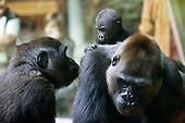 Zoo Zuerich