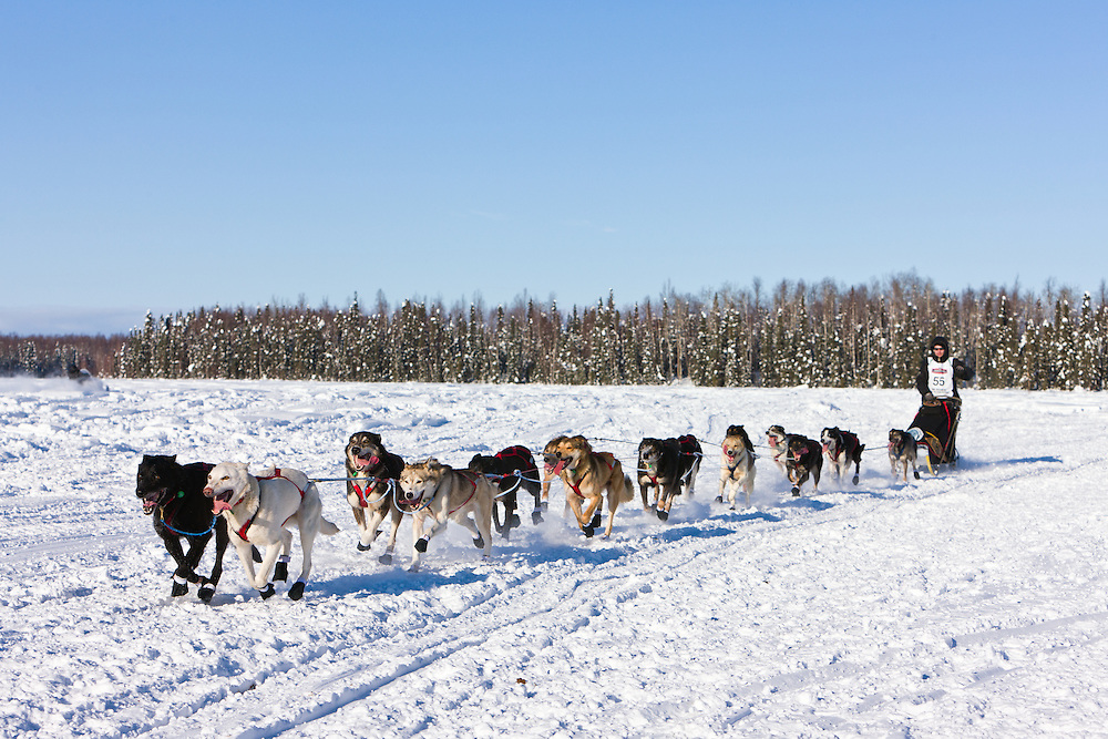 Musher Josh Cadzow competing in the 40th Iditarod Trail Sled Dog Race on Long Lake after leaving the Willow Lake area at the restart in Southcentral Alaska. Afternoon. Winter.