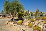 Cacti garden in the desert