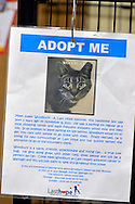 Wantagh, New York, USA. February 7, 2016. During Last Hope Animal Rescue's Open House, during Hallmark Channel Kitten Bowl III, tabby cat Woodbury's cage has an ADOPT ME sheet on it with his photo and information about this cat available for adoption. The adoption center's volunteers and visitors watched the game on TV and cheer on their team, the Last Hope Lions. Over 100 adoptable kittens from Last Hope Inc and North Shore Animal League America participated in the taped games, and the Home and Family Felines won the 2016 championship, which first aired the day of Super Bowl 50.