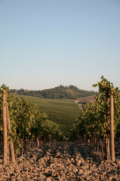 Vines, Chianti, Tuscany, Italy, Frommer's Italy Day By Day