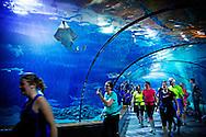 ROTTERDAM - marathon trough the Rotterdam zoo in the netherlands ROTTERDAM - Harlopen door de dierentuin blijdorp Diergaarde Blijdorp (dat is de kant van het Oceanium)  dier dieren copyright robin utrecht