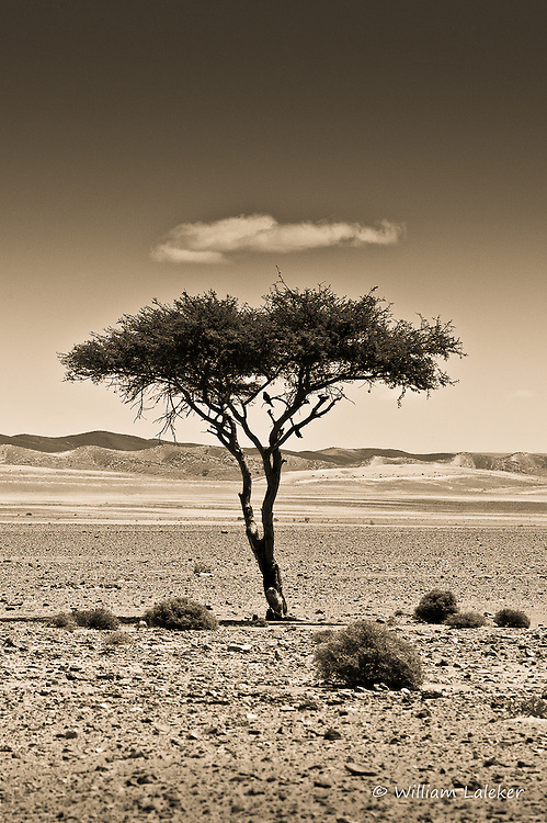 Cloud, Tree and Bird in the Sahara