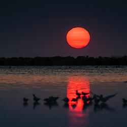 Bando de andorinhas do mar (fora de foco no primeiro plano) ao pôr do sol nas Salinas do Mussulo.