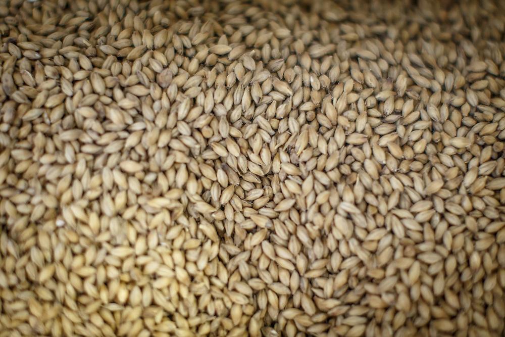 Barley at Chichibu Distillery in Chichibu, Saitama Prefecture, Japan, November 4, 2015. Gary He/DRAMBOX MEDIA LIBRARY