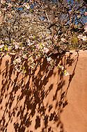 Abiquiu, New Mexico, Georgia O'Keefe home, adobe wall, spring blossums