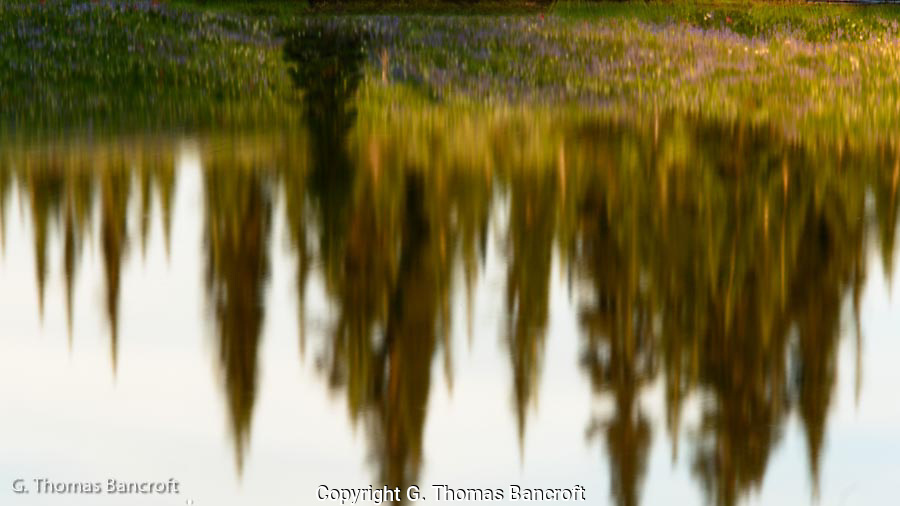 The trees and alpine flowers reflected in the glassy waters of the alpine tare.
