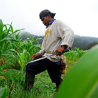 Town, of Boquete, Province of Chiriqui, country of Panama. .The native indigenous Ngobe are the main labor force for the hundreds of farms of Boquete.  Depending on the season they can be found working on coffee, corn, or onion plantations.