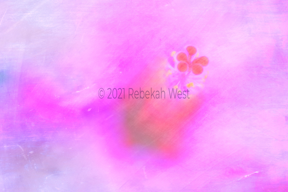 Soft red orange five knobbed stamen yellow dots, red and orange flower shmear, flower sits left of center closer to top in horizontal field of purples and fuschias with some blue and orange, flower art, feminine, iridescent, high resolution, licensing, 5616 x 3744