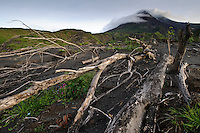 Trees damaged in an eruption at the foot of Gunung Merapi, Kinahrejo, Java, Indonesia.