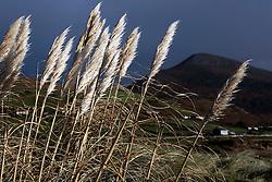 IRELAND KERRY INCH 4NOV05 - Landscape near Inch Strand on the Dingle Peninsula, Irelands most westerly county...jre/Photo by Jiri Rezac..© Jiri Rezac 2005..Contact: +44 (0) 7050 110 417.Mobile: +44 (0) 7801 337 683.Office: +44 (0) 20 8968 9635..Email: jiri@jirirezac.com.Web: www.jirirezac.com..© All images Jiri Rezac 2005 - All rights reserved.