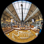 November 21~28, 2014  •  Paris, France  •  new images for 'aRound Paris'  •  skeleton collection of vast array of animals in the Galeries d'Anatomie comparee et de Paleontologie