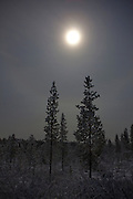 "Moonlight showing through snowclouds above the taiga, December 2011.  Image made during the long hours of the polar night, in boreal forest, beside Lake Muddusjärvi, Inari, Lapland, 300km north of the Arctic Circle in Finland. This mage can be licensed via Millennium Images. Contact me for more details, or email mail@milim.com For prints, contact me, or click ""add to cart"" to some standard print options."