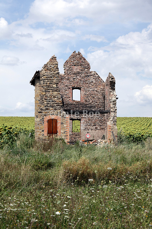 little ruined house on the edge of a sunflower field