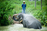 A mahout watches his elephant bathe at the Pattaya Elephant Village, Pattaya, Thailand.