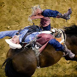 """Jessy Davis, from Power Montana holds onto """"Control Freak"""" during the championship round of the bareback bronc riding portion of the Snake River Stampede at the Ford Idaho Center in Nampa, Idaho. Davis scored an 87.5 on the ride. Saturday July 23, 2016"""