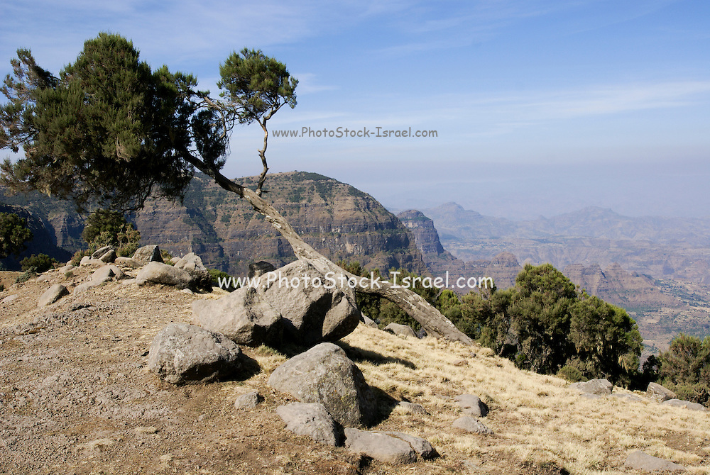 Africa, Ethiopia, the Simien Mountains National Park,