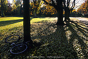 Creeping Shadows of Horse Chestnut Tree (aesculus hippocastanum) and Abandoned Bicycle, Florence Park, Oxford, England