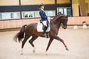 Adelinde Cornelissen - Fleau de Baian<br /> KNHS Indoorkampioenschappen 2017<br /> © DigiShots