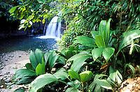 France - Département d'Outre mer de la Guadeloupe (DOM) - Basse Terre - Parc National de la Guadeloupe - Saut de la Lezarde