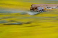 Autumn reflections; Virgin River, Zion National Park