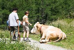 """THEMENBILD - Nach dem wiederholten Angriff von Kühen auf Wanderer ruft die österreichische Landwirtschaftskammer zu höchster Vorsicht auf und warnt vor """"unberechenbaren"""" Kühen. Unser Bild zeigt eine dreiköfige Familie weicht erschrocken zurück nachdem sich eine Kuh am Wegrand aufrichtet, Aufgenommen am 30. Juli 2006 im Kalser Dorfertal. EXPA Pictures © 2014, Photographer: EXPA/ Johann Groder"""