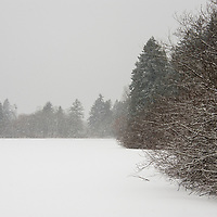 Trees surrounding a frozen snow covered lagoon during a snow storm.