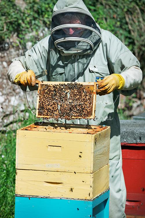 Hugo Straker removing honey bees from hive.
