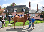 Suffolk Punch horse outside the Sorrel Horse pub, Shottisham, Suffolk, England. The pub was bought by the local community in August 2011.
