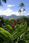 Red Ginger, Hanalei, Kauai, Hawaii<br />