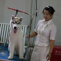 BEIJING, den 5. Juni, 2011 : Hundehalter und Trainer bereiten ihre Lieblinge fuer einen Wettbewerb in Peking vor. Die Teilnehmer kommen aus ganz China.