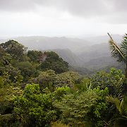 El Yunque National Forest, Puerto Rico.
