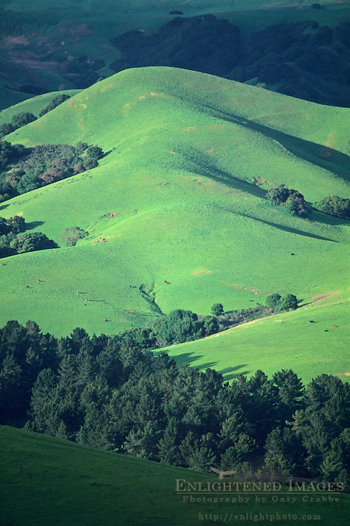 Green hills in spring, Briones Regional Park, near Orinda, Contra Costa County, CALIFORNIA