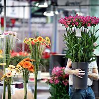 Nederland, Amsterdam , 11 oktober 2010..Opbouw van de Horti Fair in de RAI..Horti Fair is de internationale vakbeurs voor de tuinbouw, jaarlijks in Amsterdam. Het is internationaal de meest complete tuinbouwvakbeurs en in Nederland het drukst bezochte tuinbouwevenement..Foto:Jean-Pierre Jans